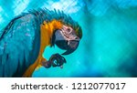 blue and yellow macaw | Shutterstock . vector #1212077017