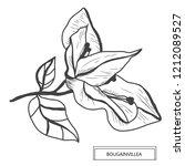 decorative bougainvillea... | Shutterstock . vector #1212089527