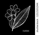 decorative plumeria flowers ... | Shutterstock . vector #1212101344