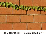 Red Brick Wall With Common Ivy...