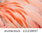 Texture Of Pink Flamingo...
