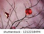 late autumn still life  ikebana ... | Shutterstock . vector #1212218494