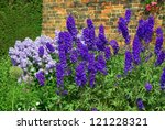 Blue Delphinium And Campanula...