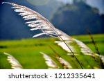 autumn wind   reeds in the wind ... | Shutterstock . vector #1212335641