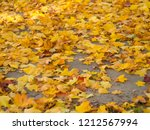 colorful beautiful autumn... | Shutterstock . vector #1212567994