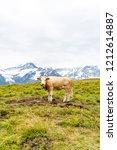 cow in switzerland alps... | Shutterstock . vector #1212614887