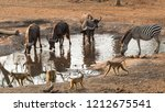 groups of water buffalo  yellow ... | Shutterstock . vector #1212675541