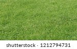 thick and green grass in the... | Shutterstock . vector #1212794731