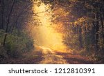 road in the autumn forest | Shutterstock . vector #1212810391