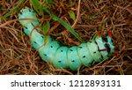hickory horned devil... | Shutterstock . vector #1212893131