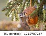 cute european crested tit bird... | Shutterstock . vector #1212907267