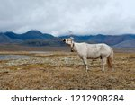 the horses of the yakut breed ... | Shutterstock . vector #1212908284