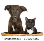 Stock photo cat and dog looking at camera isolated on white background 121297357