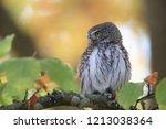 eurasian pygmy owl swabian jura   Shutterstock . vector #1213038364