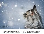 Stock photo silver tabby maine coon cat standing in the snow and gazing at falling snow 1213060384