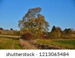 looking at an autumn tree  hill ... | Shutterstock . vector #1213065484