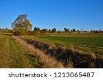 looking at an autumn tree  hill ... | Shutterstock . vector #1213065487