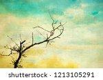 vintage textured bare tree in... | Shutterstock . vector #1213105291