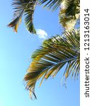palm tree leaves against a...   Shutterstock . vector #1213163014
