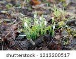 a macro closeup of green and... | Shutterstock . vector #1213200517