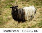 wild goat in the highlands of... | Shutterstock . vector #1213317187