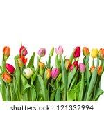 Border Of Fresh   Tulips...