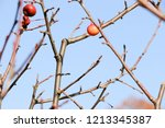 small red apples and blue sky.... | Shutterstock . vector #1213345387