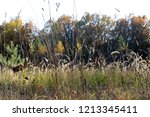 meadow with tall dryed out... | Shutterstock . vector #1213345411