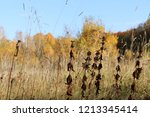 meadow with tall dryed out... | Shutterstock . vector #1213345414