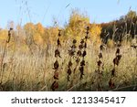 meadow with tall dryed out... | Shutterstock . vector #1213345417