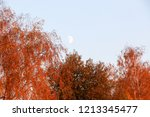 yellow leaves against a blue... | Shutterstock . vector #1213345477