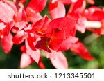 autumn colorful barberry red... | Shutterstock . vector #1213345501