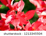 autumn colorful barberry red... | Shutterstock . vector #1213345504