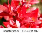 autumn colorful barberry red... | Shutterstock . vector #1213345507