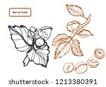 isolated vector set of nuts on... | Shutterstock .eps vector #1213380391