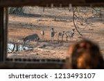watching zebras from a hide in... | Shutterstock . vector #1213493107