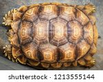 Stock photo close up of beautiful tortoise shell top view armature turtle old broke real texture background 1213555144