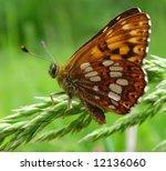 dotted butterfly | Shutterstock . vector #12136060
