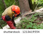 forestry worker in protective... | Shutterstock . vector #1213619554