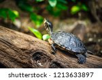 Close Up View On Turtle On...
