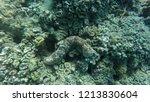 snorkeling  safari blue  menai... | Shutterstock . vector #1213830604
