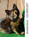 one dark kitten is turtle... | Shutterstock . vector #1213831207