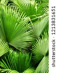 southern heat loving plants and ... | Shutterstock . vector #1213831651