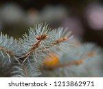 sprig of blue christmas tree....   Shutterstock . vector #1213862971
