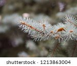 a branch of a christmas tree....   Shutterstock . vector #1213863004