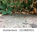 one red soldier bug bunch of... | Shutterstock . vector #1213883521