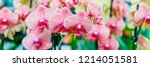 phalaenopsis orchid pink... | Shutterstock . vector #1214051581