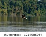 bald eagles of virginia | Shutterstock . vector #1214086054