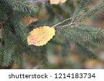 birch leaf entangled in the... | Shutterstock . vector #1214183734