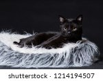 cat of black color lies on its... | Shutterstock . vector #1214194507